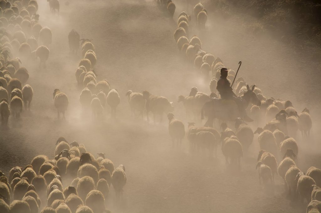 When the Shepherd is stricken down, the Sheep scatter 1